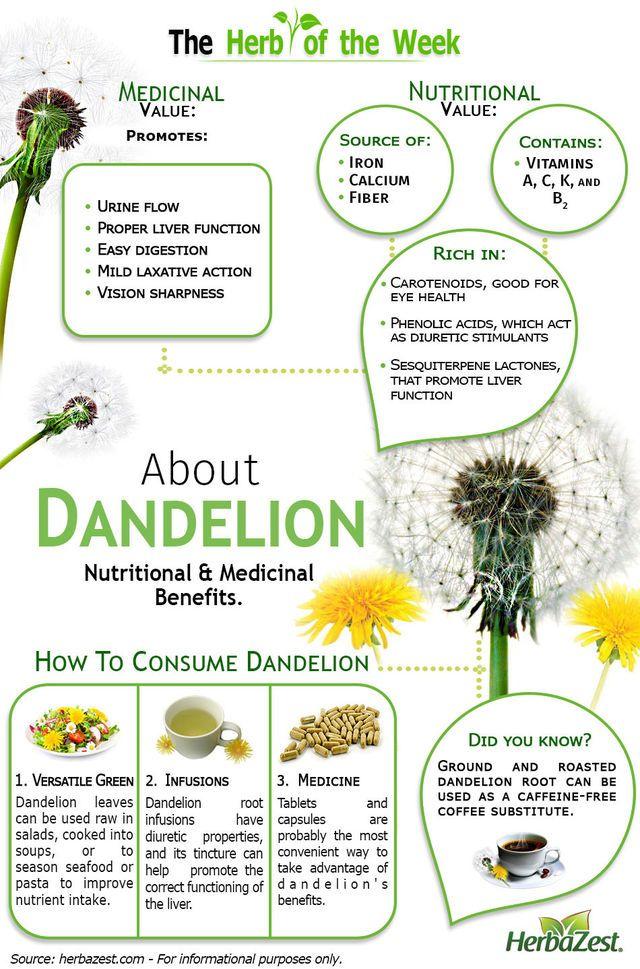 Dandelion Herbs Nutrition Medicinal Herbs