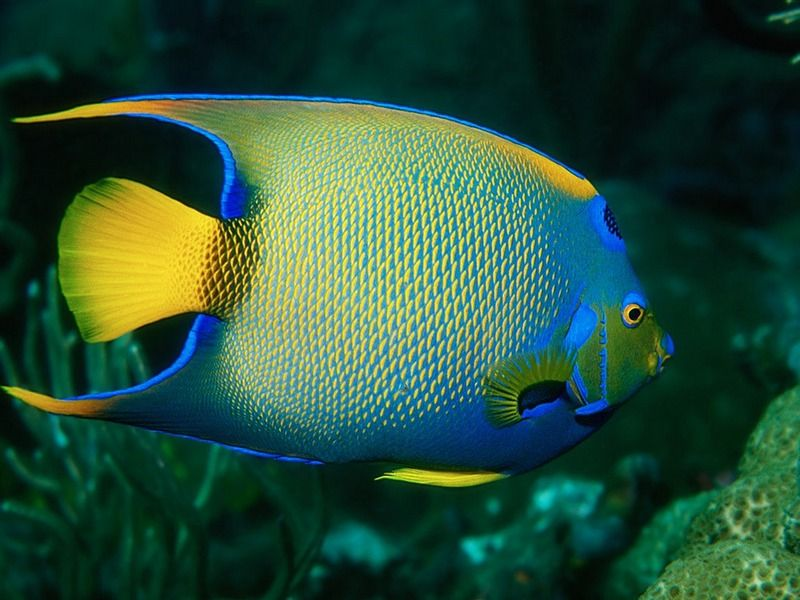 Coral reef animals names screen themes coral reef fish for Saltwater fish names