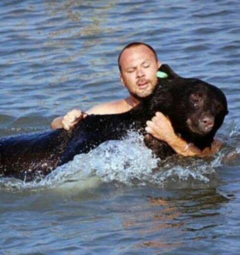 Homem salva urso que estava se afogando.