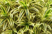 Ces 10 plantes qui dépolluent
