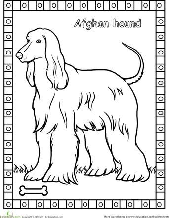 Worksheets Afghan Hound Coloring Page