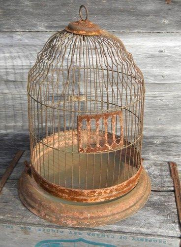 Betting birdcage su sports betting