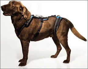 Orthopedic Equipment For Dogs Designed For Increased Mobility And