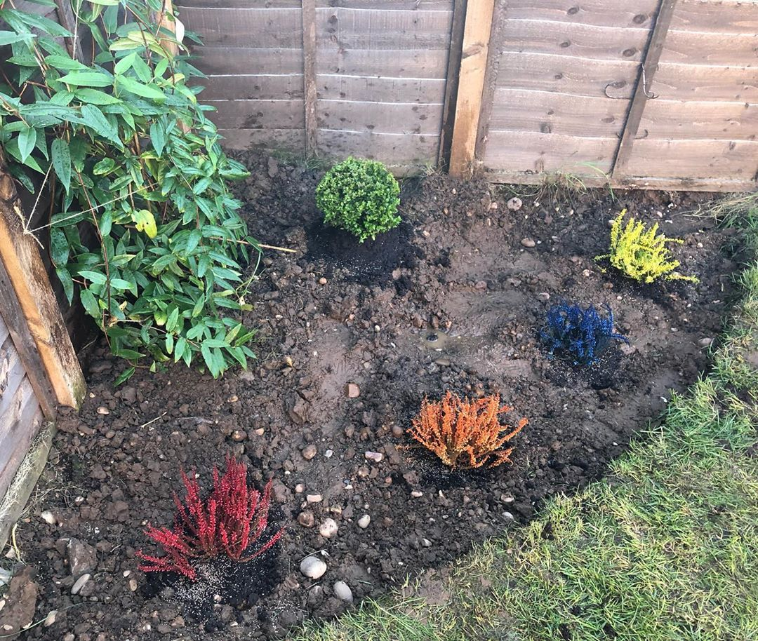 Harry Potter Themed Heathers Stones To Follow My Grass Is Just Stones And Awful Clay Harrypotterheathers Heathe Plants Outdoor Decor Grass