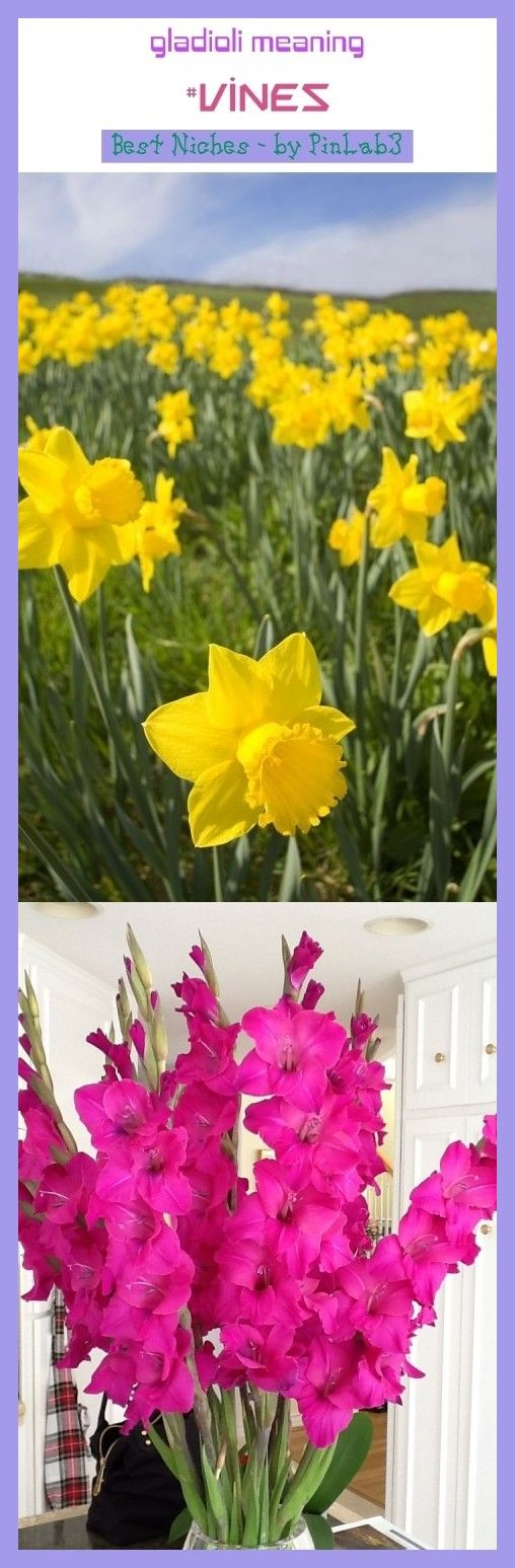 Gladioli Meaning Gladioli Meaning Bedeutung Glaieuls Signification Gladioli Bedeutung Glaieuls Signification Signif In 2020 Gladiolus Flower Meanings Clematis