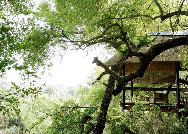 #yvonneobrien #londolozi #treecamp