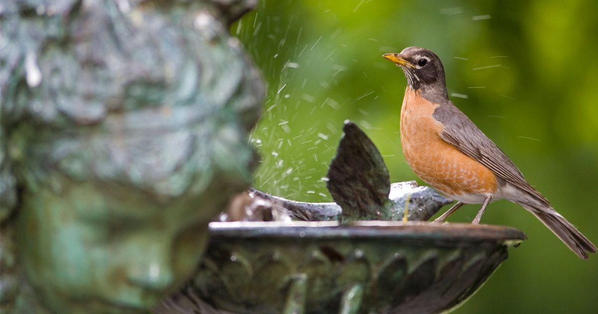 Backyard birding tips birdbaths garden ornaments bird