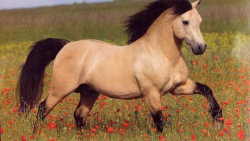 Buckskin Horse Wallpaper 153954 Hd Wallpapers Wallpapersinhq Online Horse Wallpaper Horses