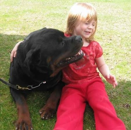 Gentlegiants Rottweilers Danette Chumley Gentlegiants