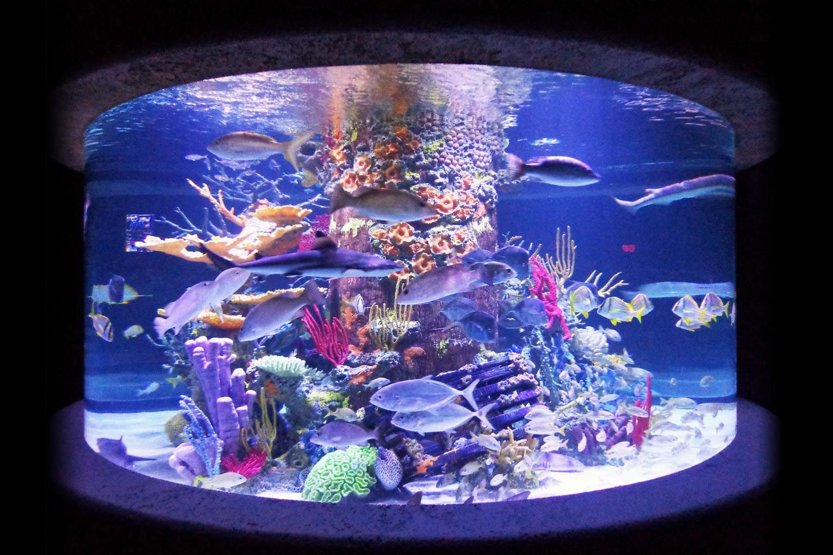Artificial Coral Reef Aquarium Decoration Inserts Aquarium Plants