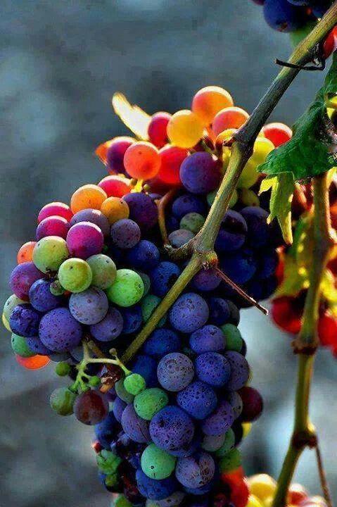 Rainbow colors.