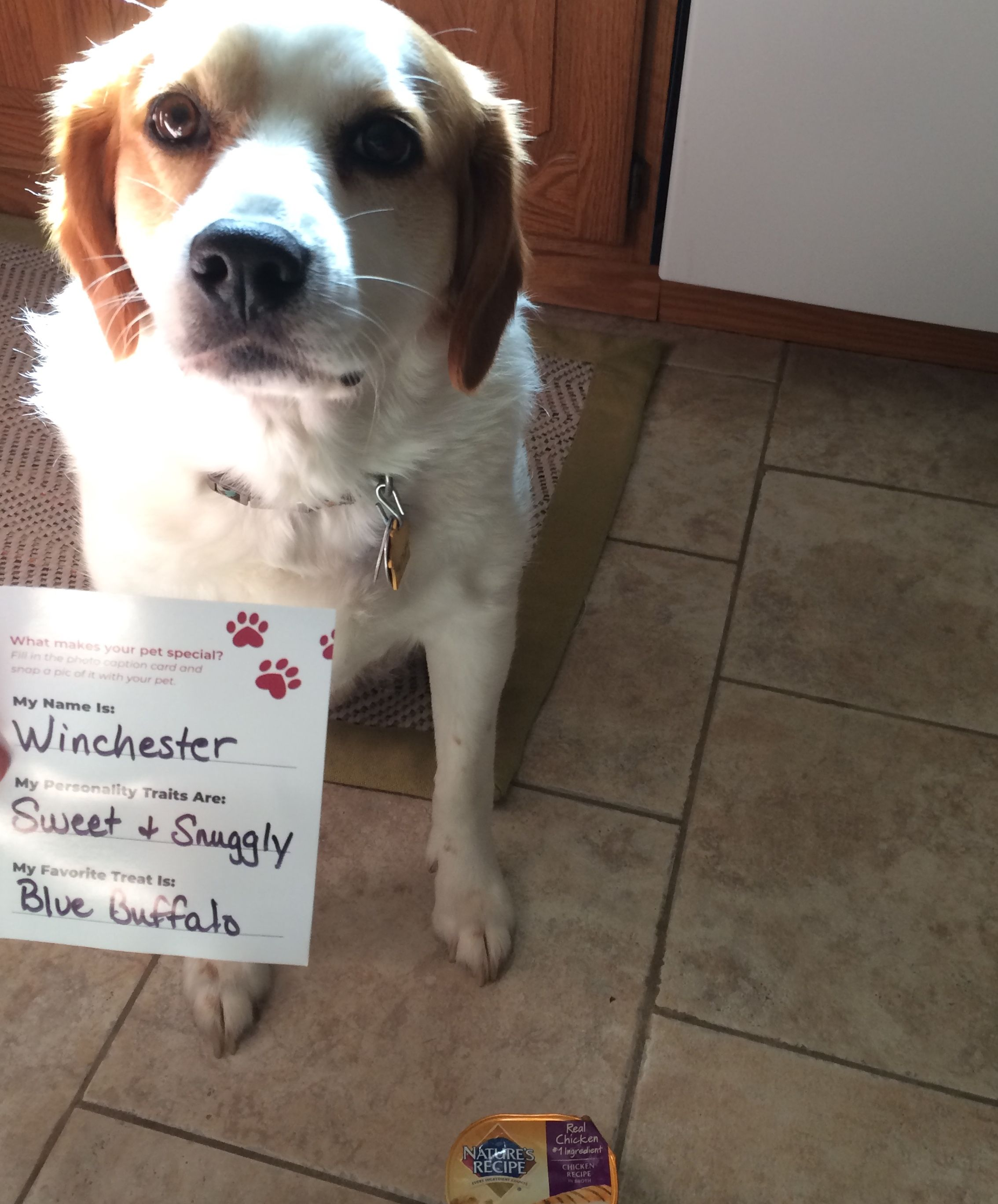 Foryourpets Mymagazinesharing Freesample Winchester Loved His