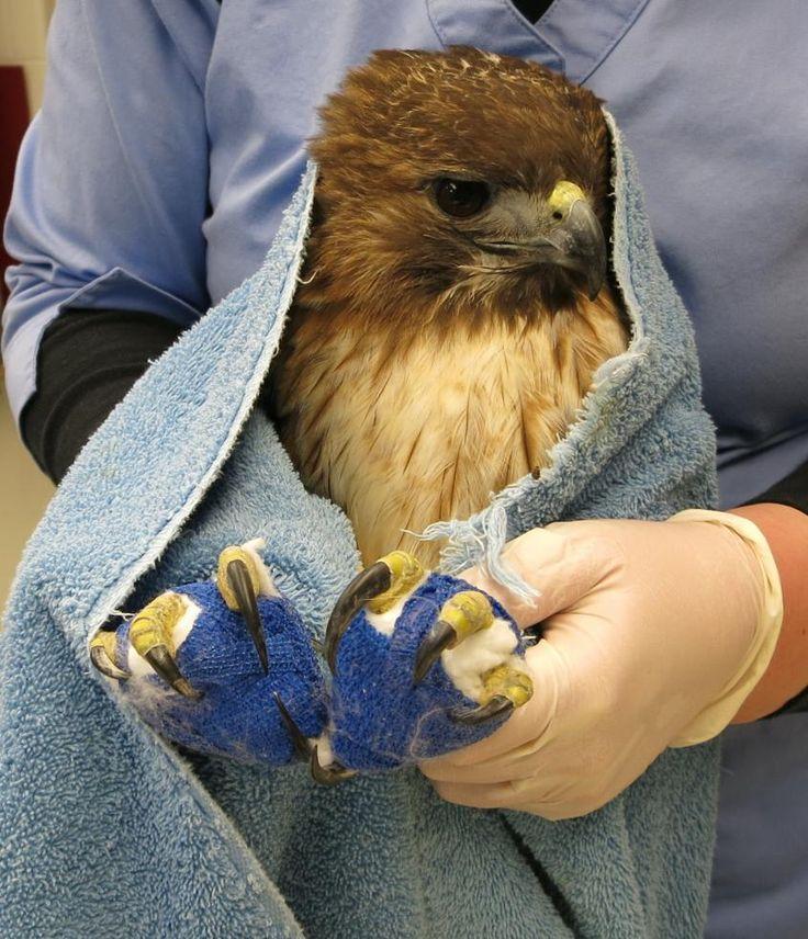 Study Wildlife medicine at Cornell CUCVM WildLIFE