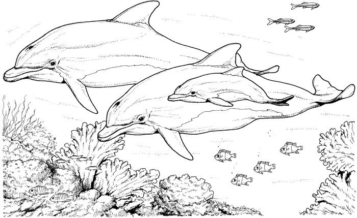 Dolphin Coloring Pages for Adults Dolphin Coloring Pages For