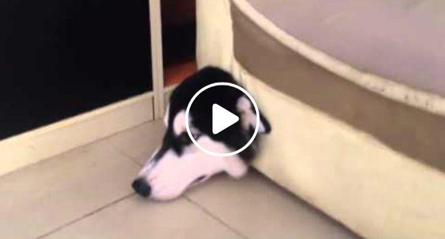 Cão Passa Por Momento Embaraçoso Depois De Tentar Apanhar Um Rato