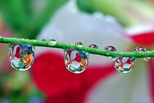 17 Best images about Water Drops Idea's on Pinterest | Spring ...