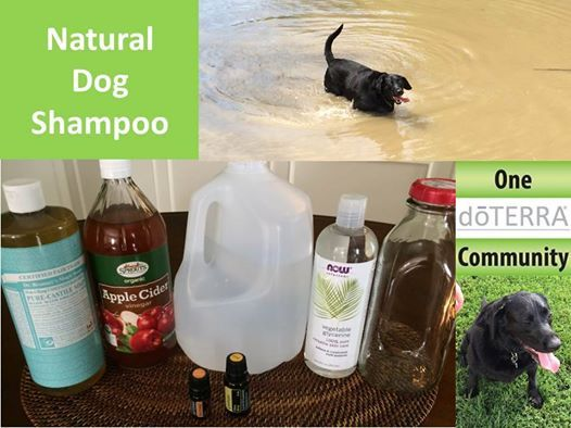 Here S The Recipe For The All Natural Dog Shampoo We Use On Our Black Lab Lizzy It Smells Great 3 Oz Cast Dog Shampoo Homemade Dog Shampoo Diy Dog Shampoo