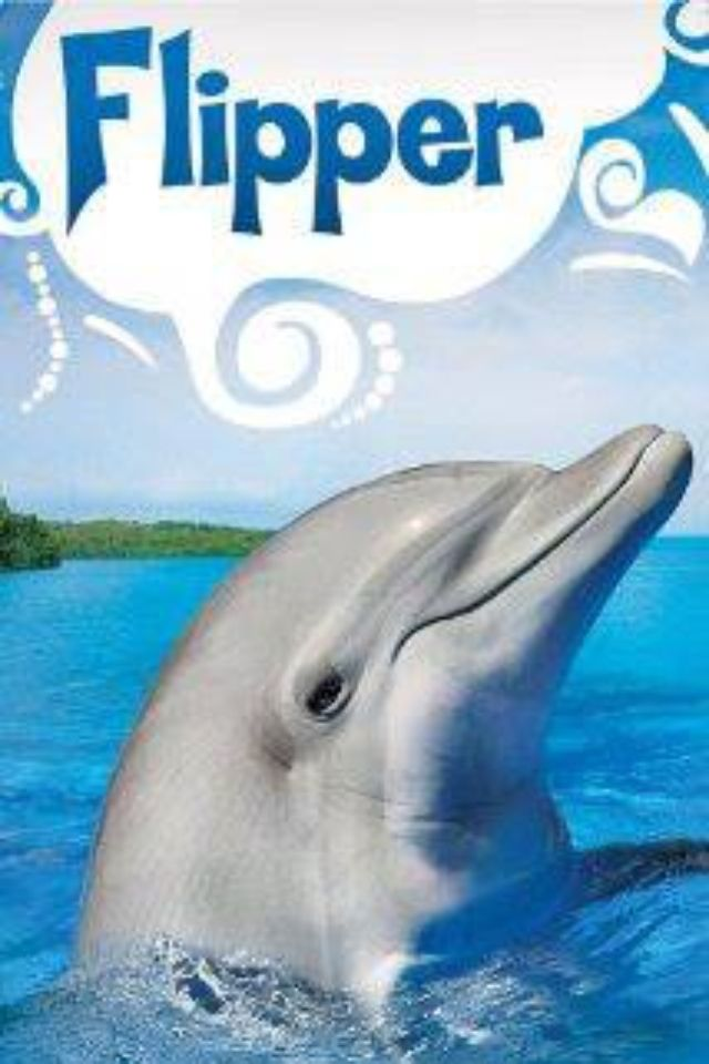 They call him Flipper