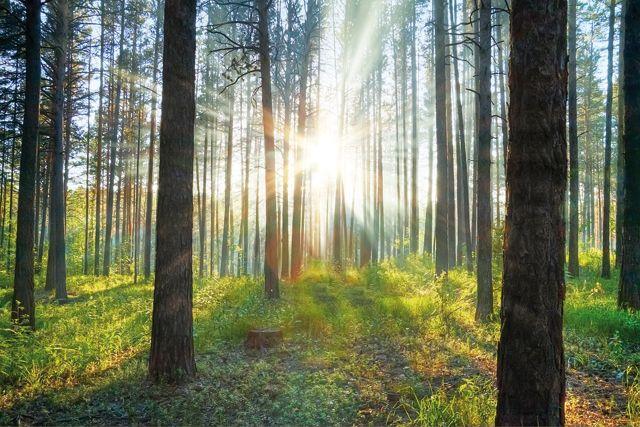 Les écosystèmes de la planète | Plantes aquatiques ...