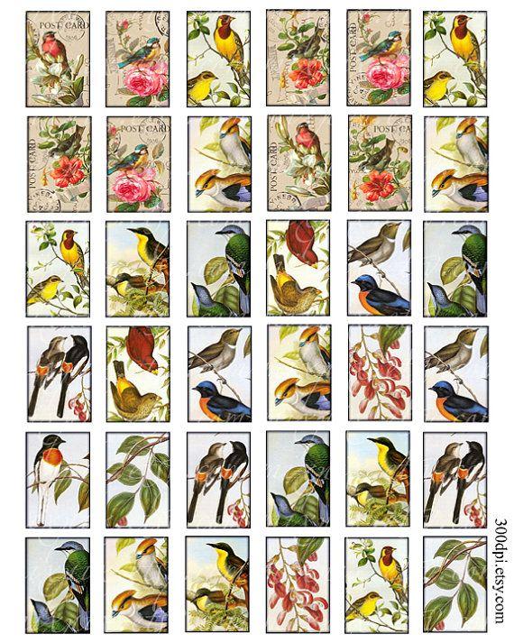 1 x 15 pulgadas azulejos vintage aves imágenes para por 300dpi