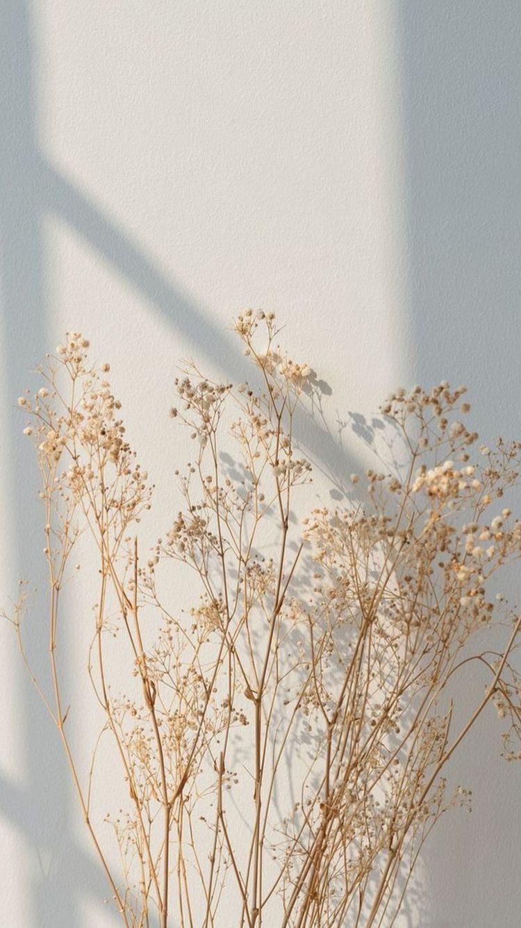 Cream Aesthetic Wallpaper Iphone
