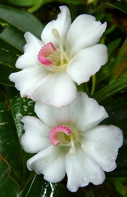 Top 35 Most Beautiful White Flowers With Pictures Flowers