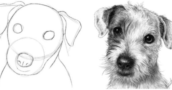 How To Draw A Dog Head Basic Shapes - Google Search