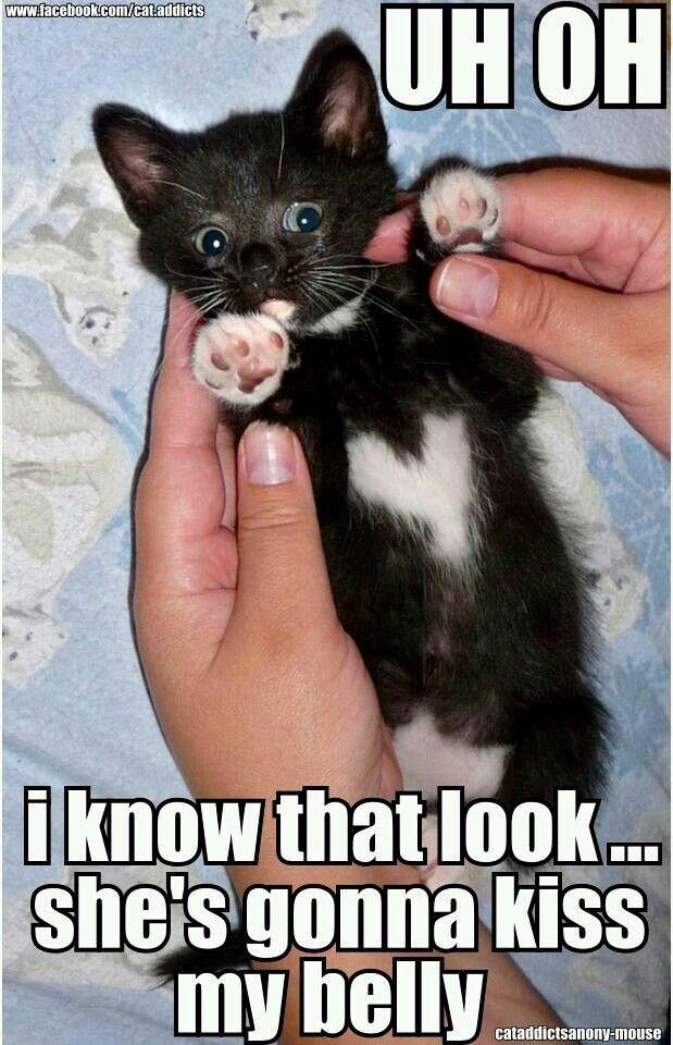 Ooh My Tummy Cute Animals Cute Baby Animals Cute Funny Animals