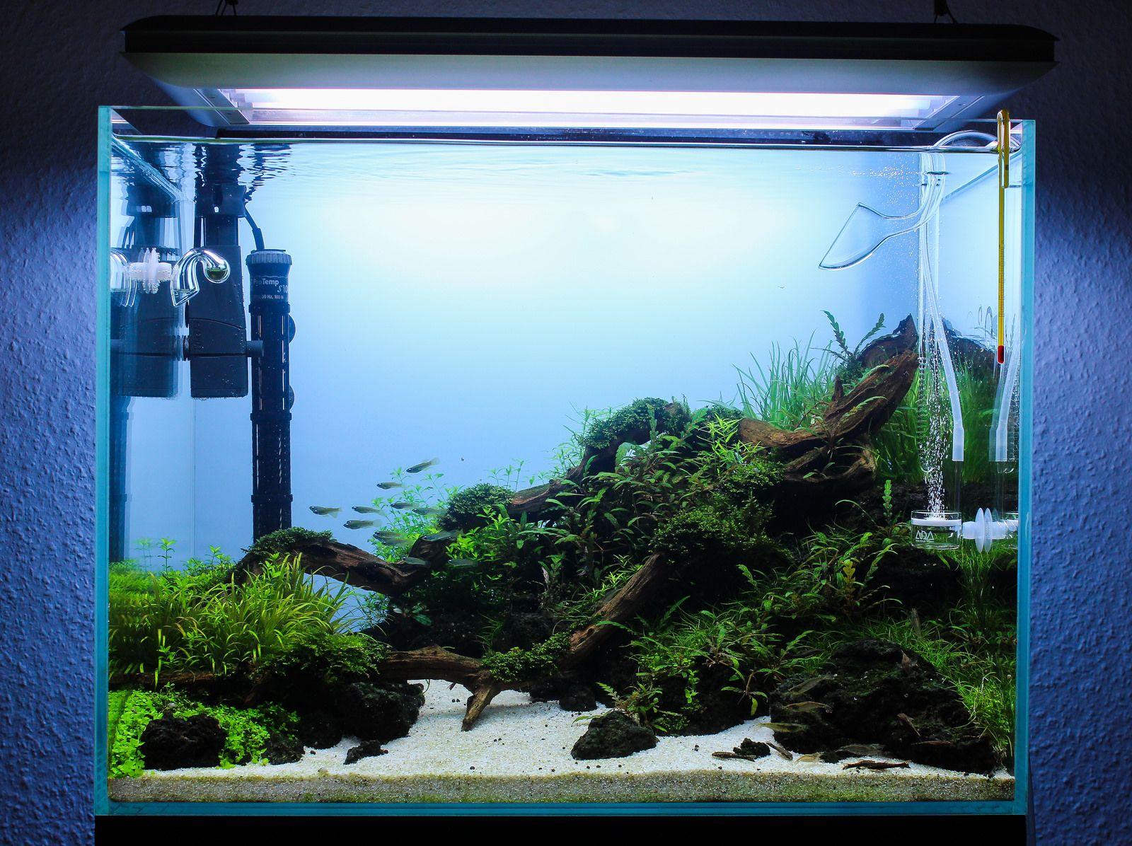 60x45x45 Cube Garden Aquascape Nature Aquarium Planted Aquarium