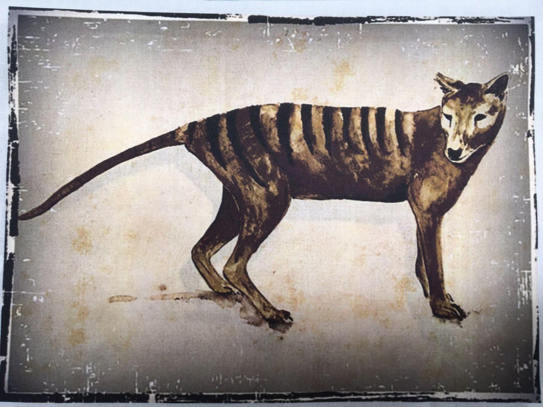 Tasmanian Tiger Or Thylacine Fabric Collection By Cindy Watkins Original Design Thylacine Tasmanian Tiger Australian Animals