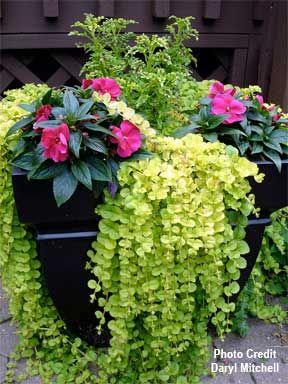 tropical garden ideas pots Small Garden Design Potted Container
