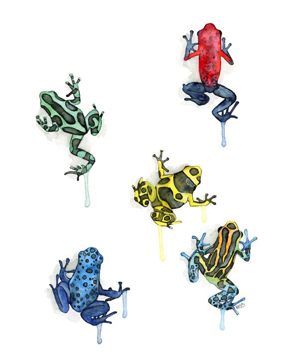 Poison Dart Frog Print - From my Original Watercolor Painting ...