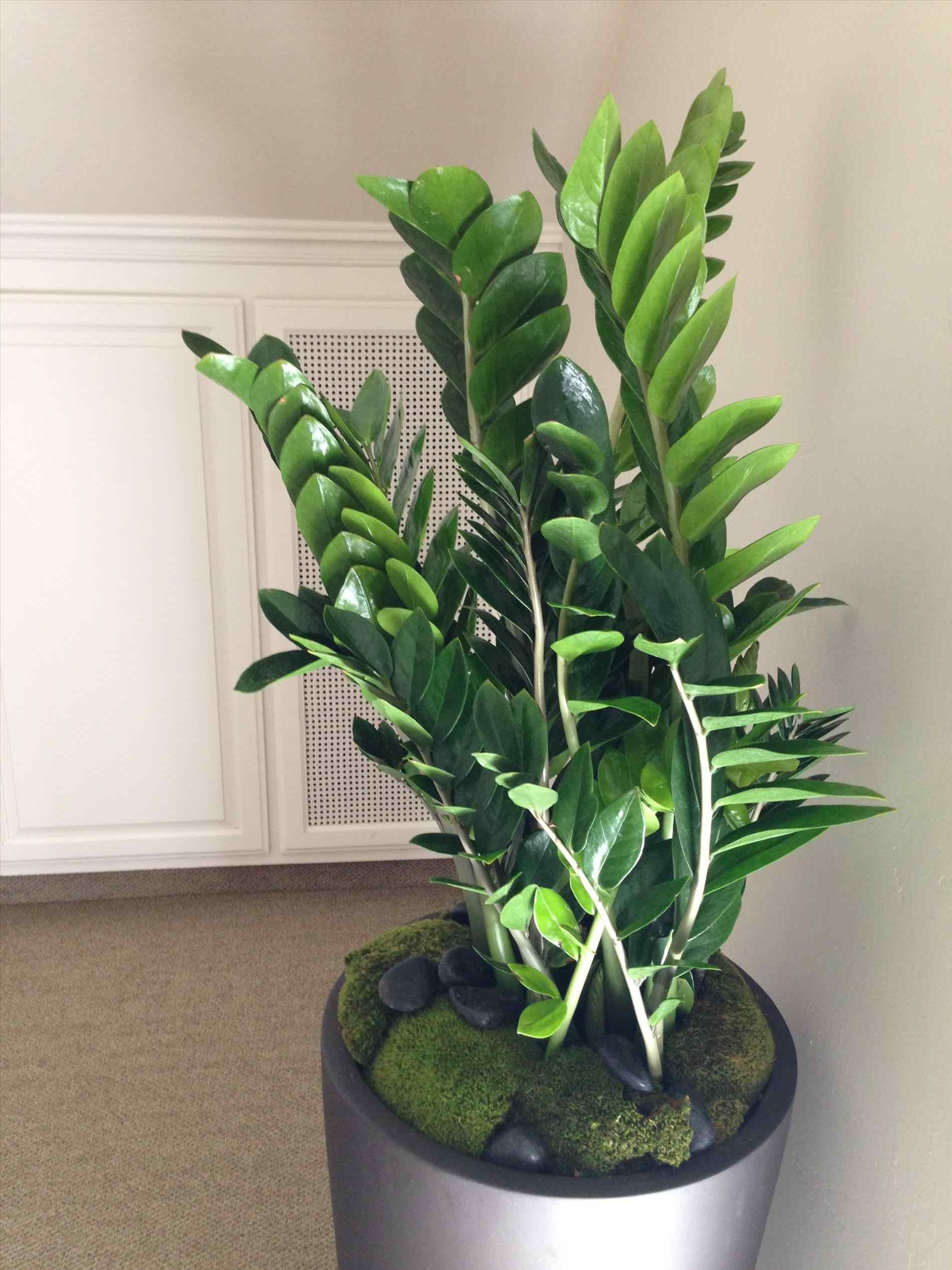 Mid century modern house plants tall indoor midcentury interior with dracaena plant premium kentia tropical plans