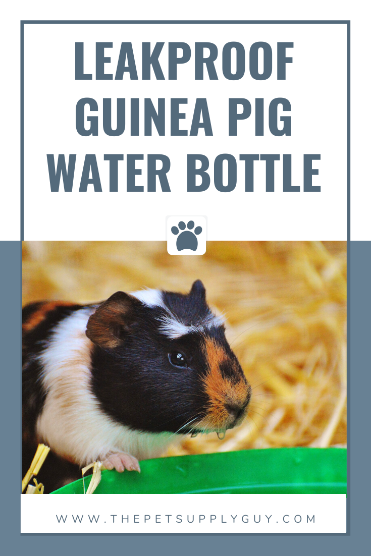 Best Guinea Pig Water Bottles (Buying Guide)