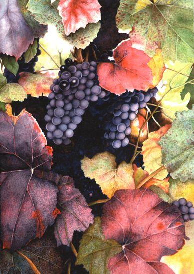 http://floridawatercolor.org/portfolios/gregory/grapes.jpg