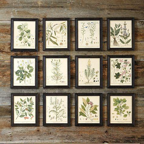 heines botanical framed print