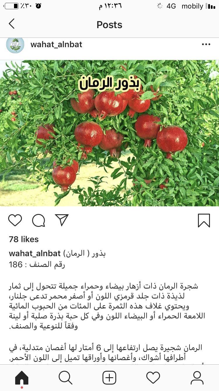 Pin By Faizah On نباتات Vegetables Garden Radish