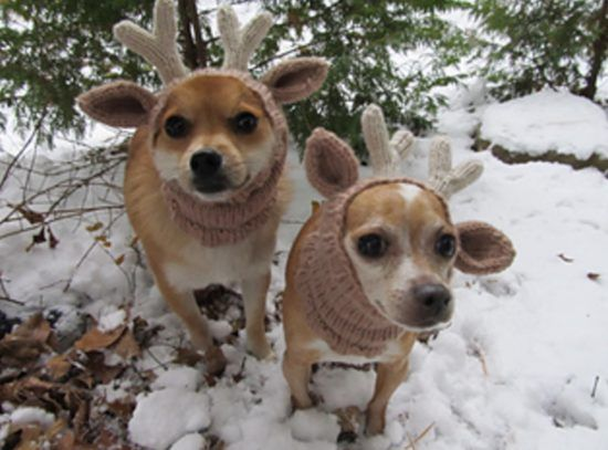 Knitted Dog Hats With Ears Easy Free Patterns The Whoot Knitting Patterns For Dogs Dog Hat Dog Pattern