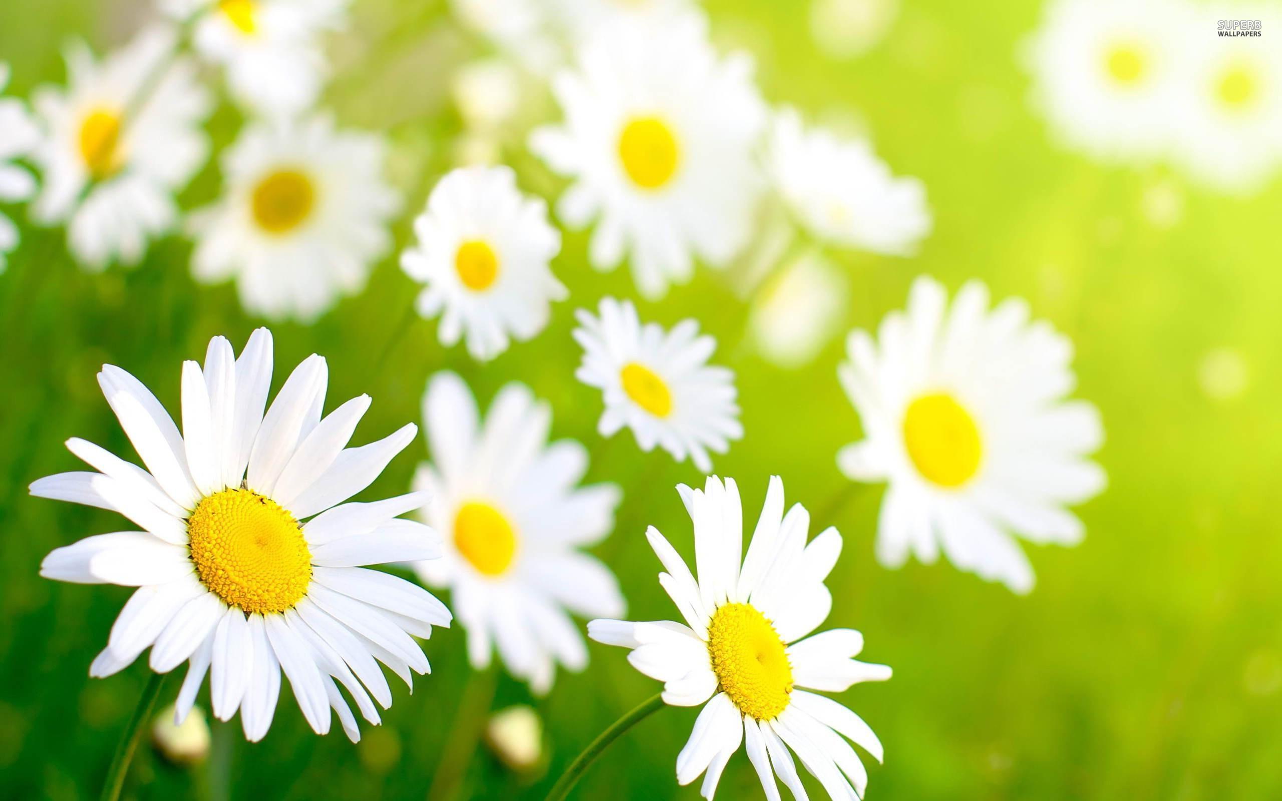 תוצאת תמונה עבור spring