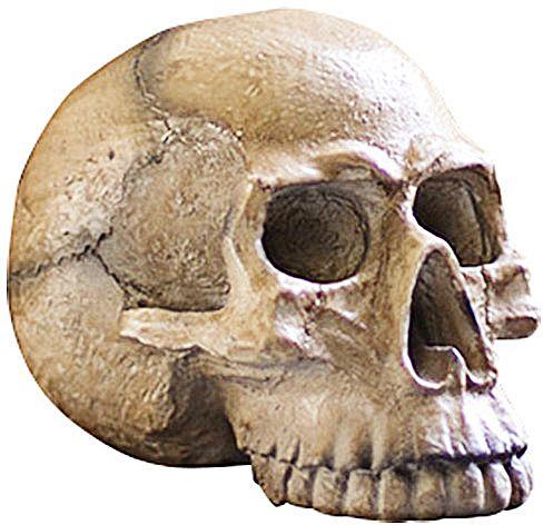 Dot  Bo Fright Night Skull Décor Best Halloween Ideas for 2017