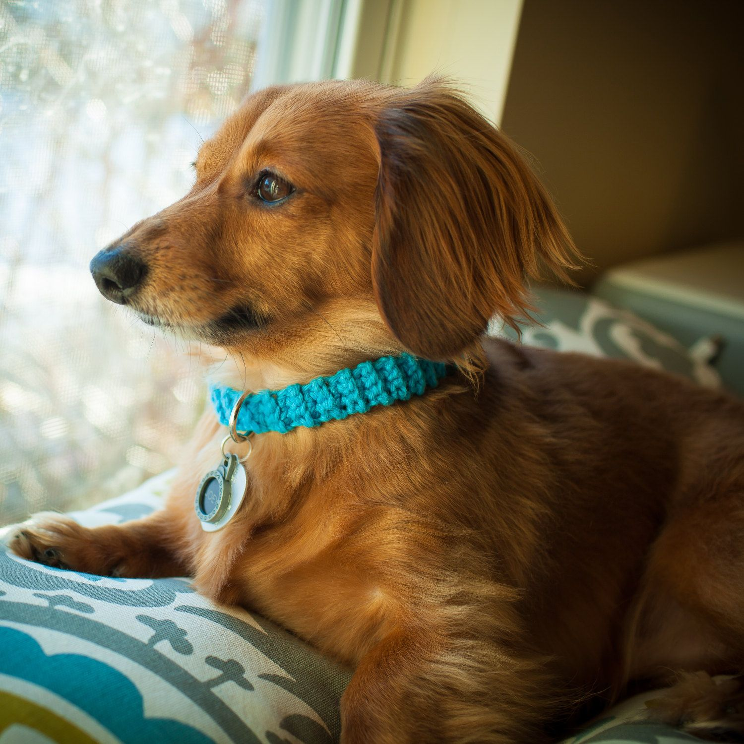 Free Shipping Crochet Collar Teal Dog Collar Collar Dachshund