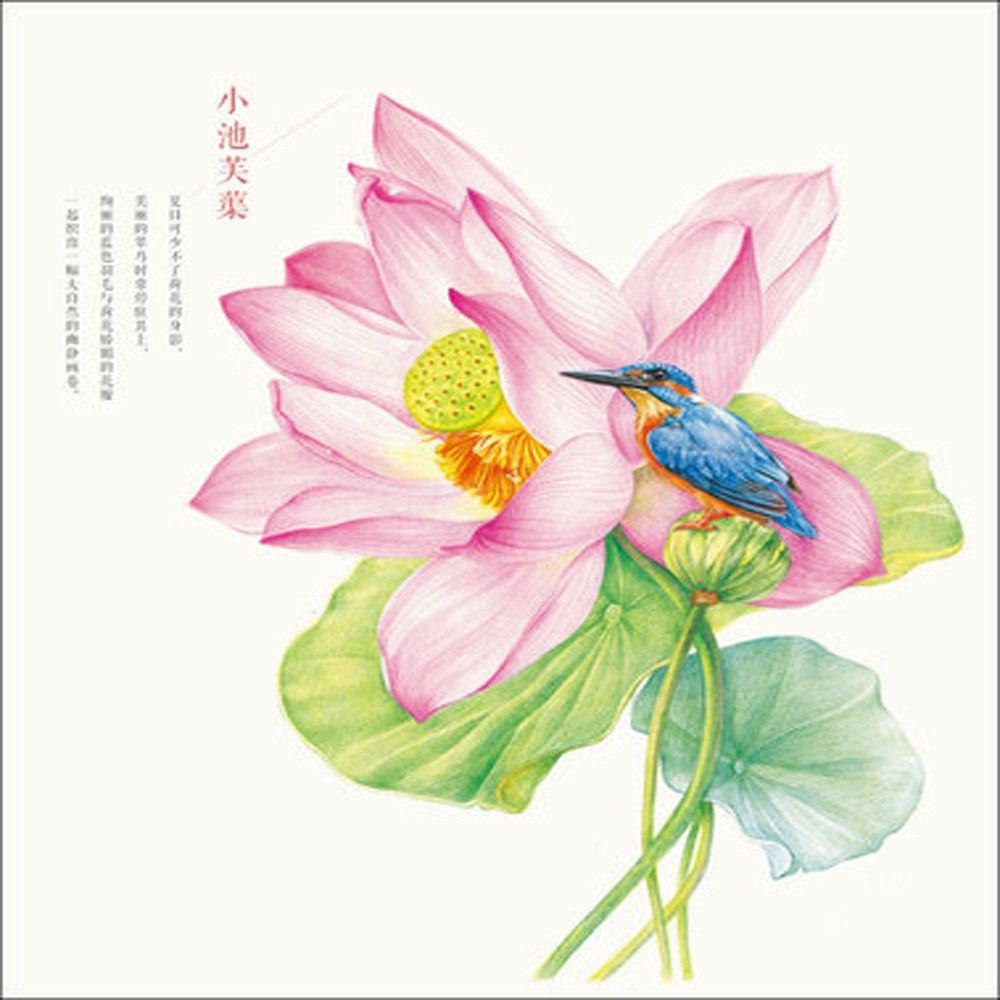 flowers painted bird color pencil drawing books pencil - Painting Color Book