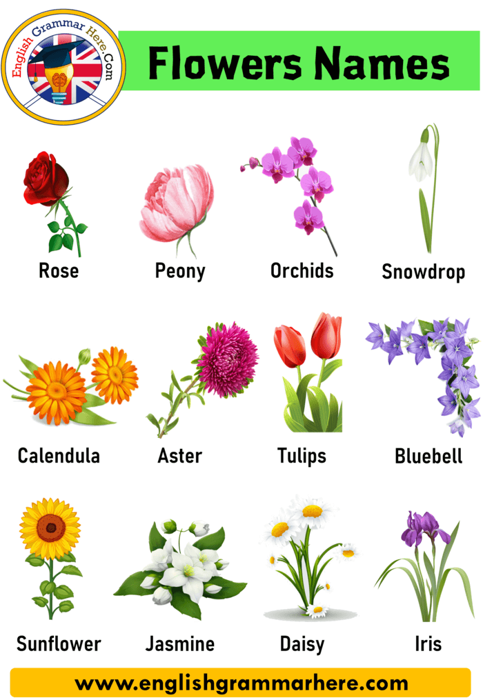 10 Flowers Name In English In This Lesson We Will Examine The Topic Of Flower Names In English The World Of Flow In 2020 Flowers Name In English Flower Names Flowers