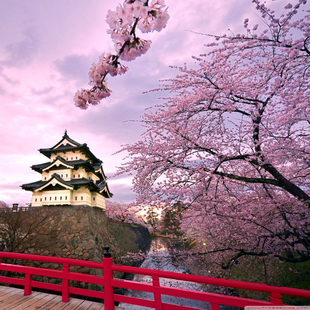 Cherry Blossoms Japan Hd Desktop Wallpaper High Definition Japanese Landscape Cherry Blossom Japan Japan