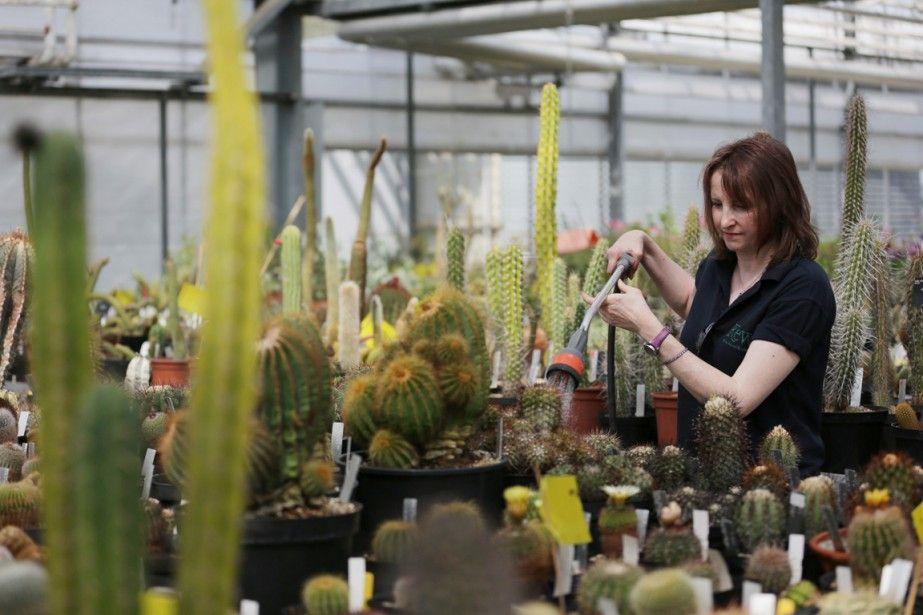 Un cinquième des espèces végétales est menacé d'extinction, selon le centre de recherche botanique des Kew Gardens de Londres qui, dans son premier rapport sur «l'état...