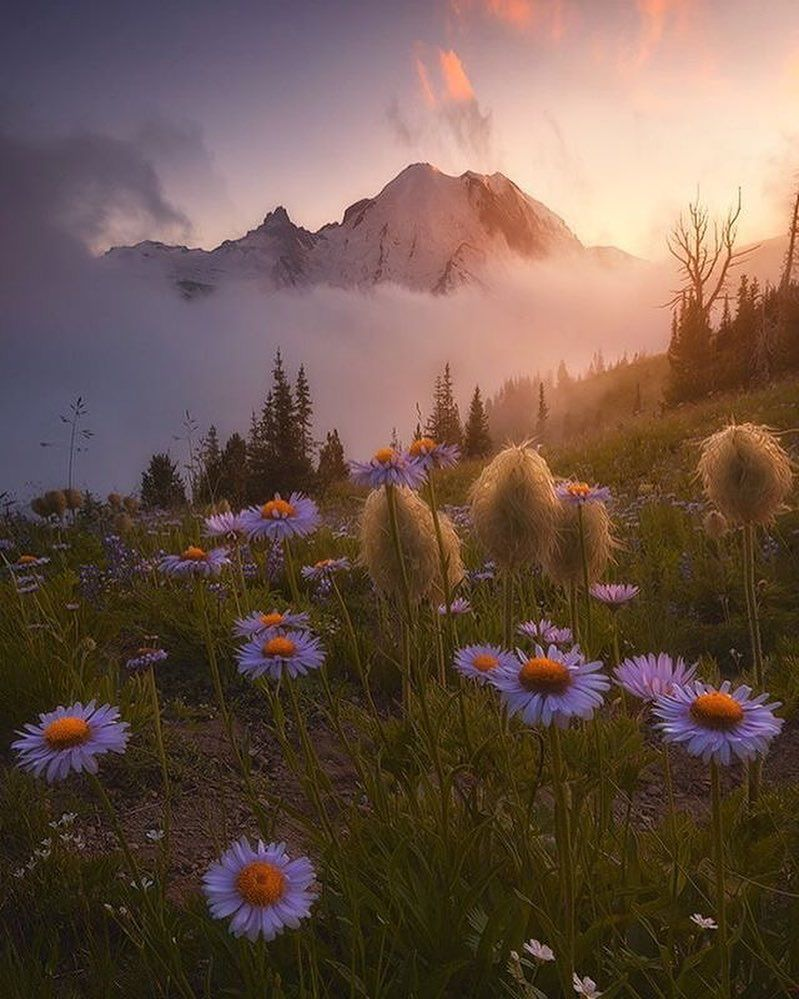 Of tulips cecila san tags flower field photoshop vintage tulips - Mount Rainier Pierce County Washington U S Photography By Ryandyar Tag Naturegeography And Follow Field Of Flowersbeautiful