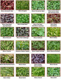 Microgreens List Google Search Microgreens Garden Micro Garden Indoor Vegetable Gardening