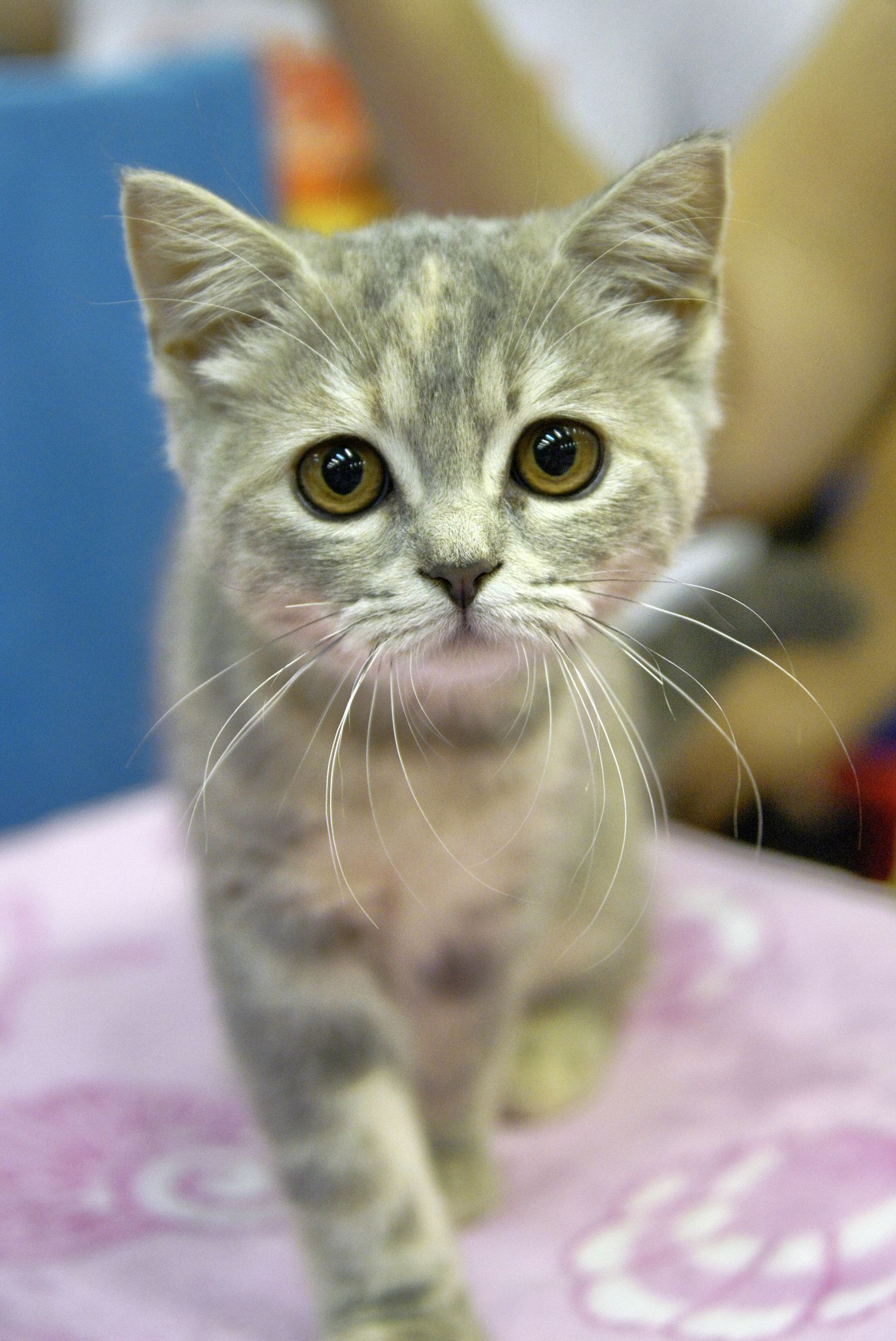 Kitten Next Pretty Cats Kittens Cutest Cute Cats And Dogs