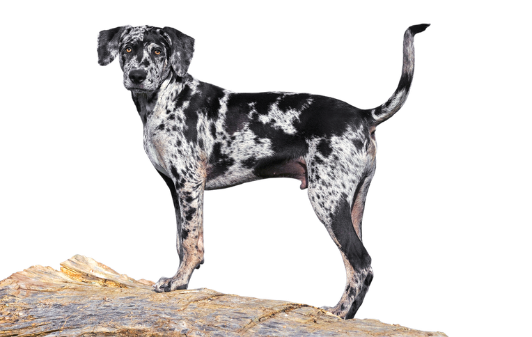 The Best Hunting Dogs For Retrieving Pointing Flushing Or Scent Outdoor Life Hunting Dogs Breeds Hunting Dogs Dog Breeds