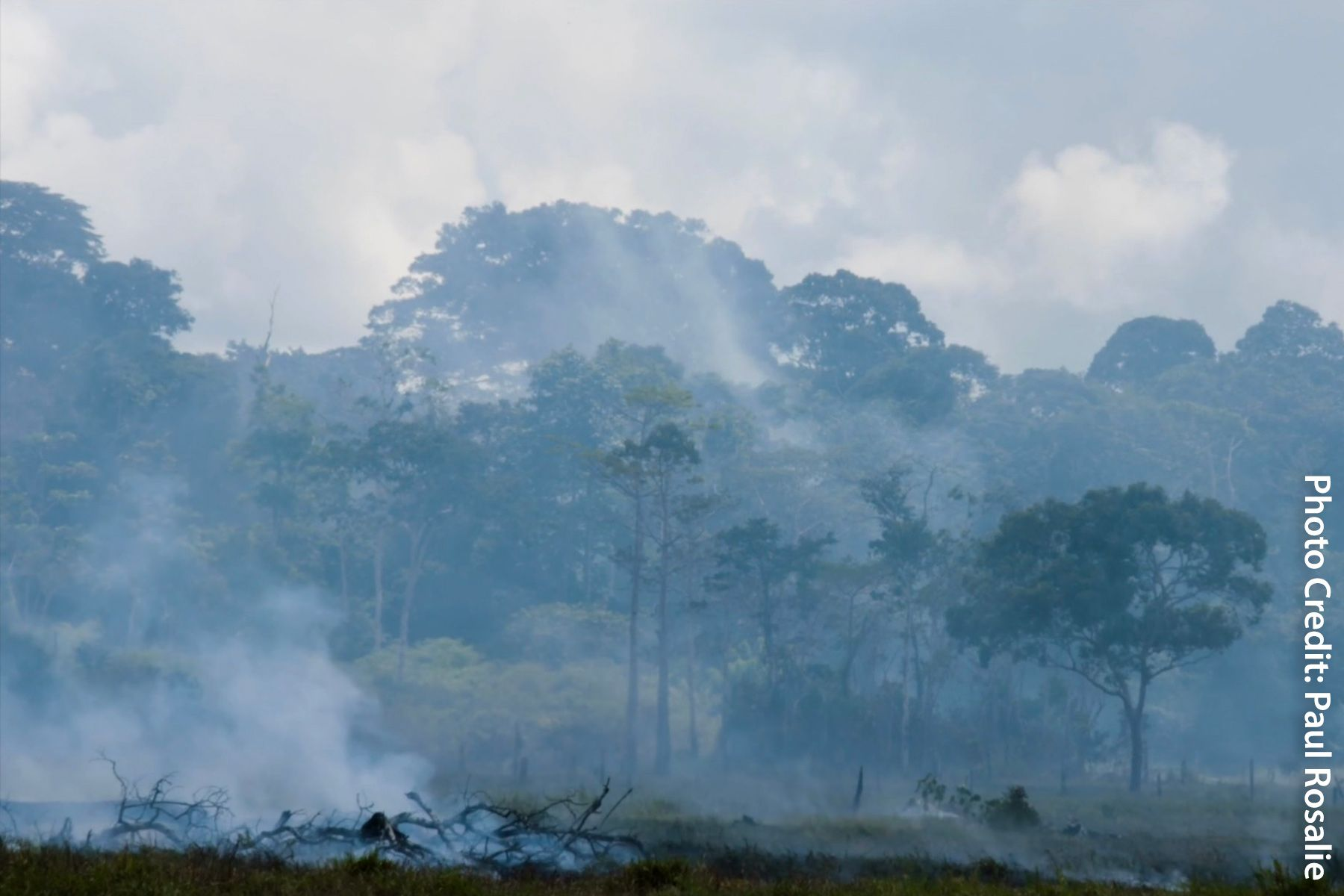 Amazon Rainforest Fires Effects On Health Weather Rainforest